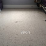Bedroom-Wall-to-Wall-Carpet-Cleaning-San-Ramon-A