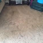 San Ramon-Dirty-Carpet