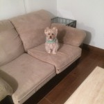 San-Ramon-Sofa-Pet-Stain-Cleaning