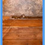 Wall-Mold-Removal-San-Ramon